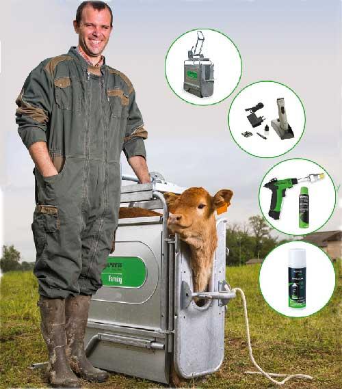 Avantages de l'écornage pour le bien-être des bovins et caprins